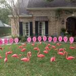 flamingos-pinkHBballoons